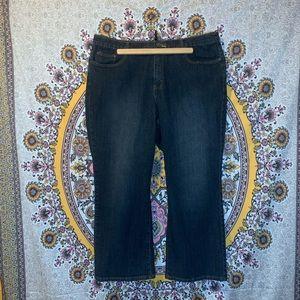 Lane Bryant Venezia brand jeans.